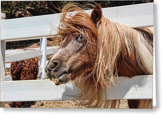 Pretty Pony After Greeting Card