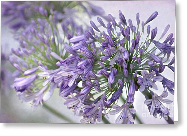 Pretty Purple Lily Of The Nile Greeting Card