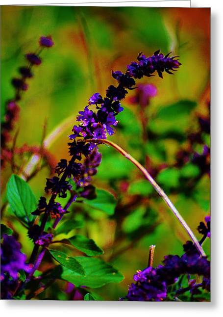 Pretty Purple Plant Greeting Card