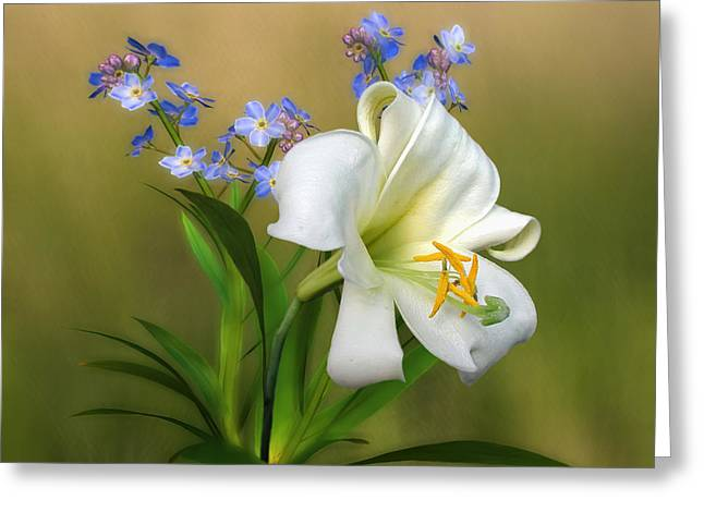 Pretty White Lily Greeting Card