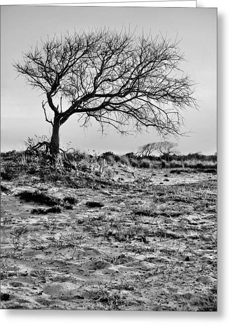 Prevailing Bw Greeting Card