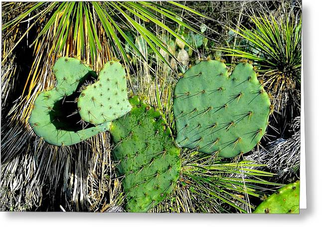 Prickley Hearts Greeting Card by Cindy Croal