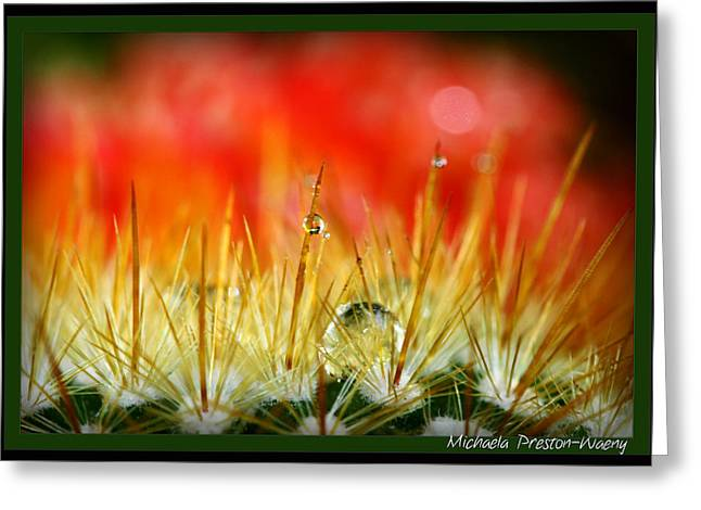 Greeting Card featuring the photograph Prickly  by Michaela Preston