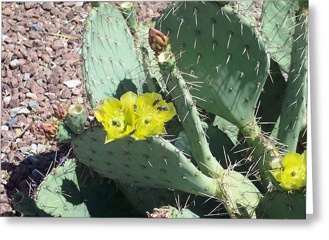 Prickly Pear Bees Greeting Card