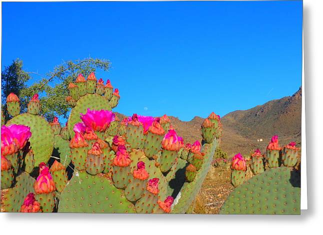 Prickly Pear Blooming Greeting Card