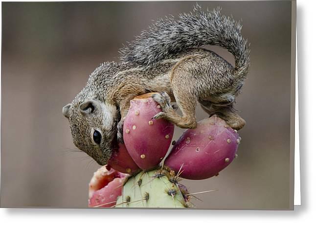 Prickly Pear Breakfast  Greeting Card by Saija  Lehtonen