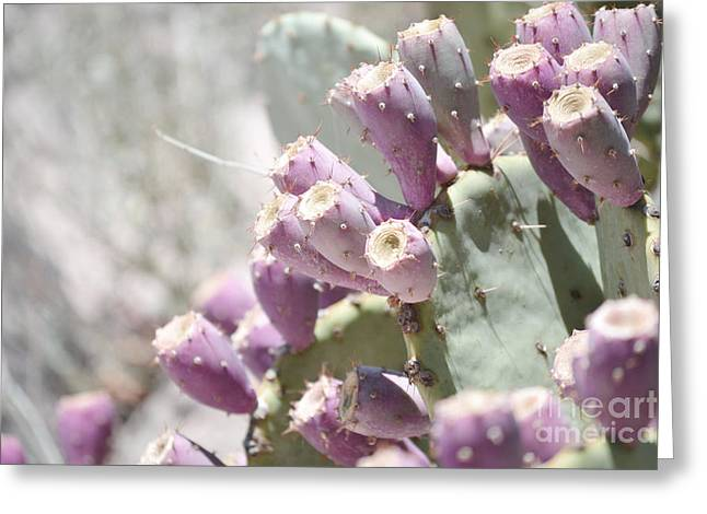 Prickly Pear Cacti Greeting Card