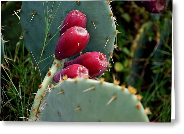 Prickly Pear Cactus Greeting Card by M E Wood