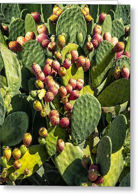 Greeting Card featuring the photograph Prickly Pear Cactus Number Three by Bob Coates