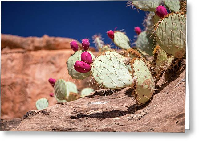 Prickly Pear (opuntia Sp.) In Fruit Greeting Card by Michael Szoenyi