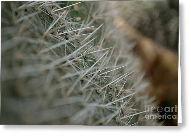 Greeting Card featuring the photograph Prickly Pear by Scott Lyons