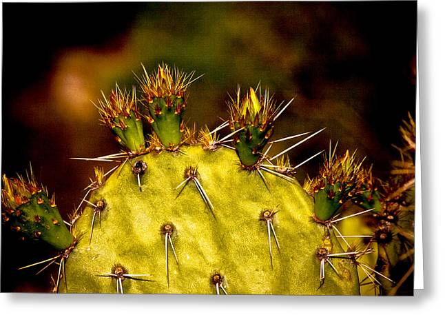 Prickly Pear Spring Greeting Card