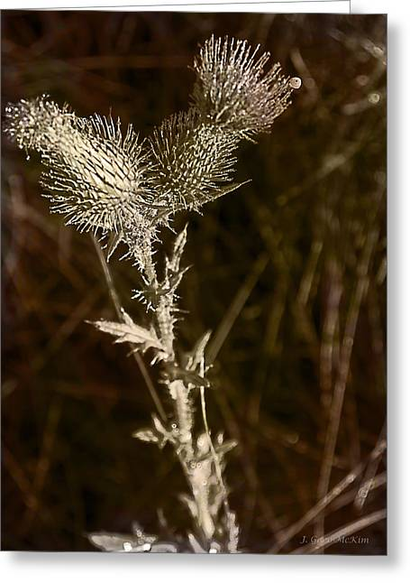 Prickly To The End Greeting Card by Jo-Anne Gazo-McKim