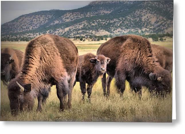 Pride Of The Herd Greeting Card