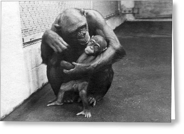 Primate Discipline Greeting Card by Underwood Archives