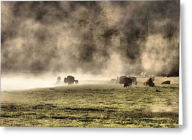 Buffalo Herd In Yellowstone Greeting Card by Dan Sproul