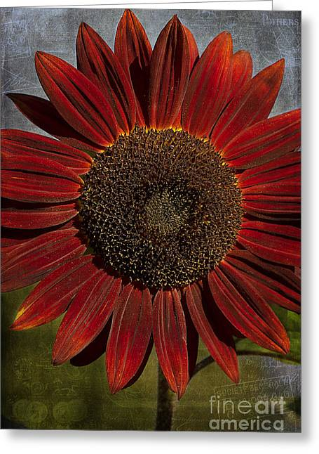 Primitive Sunflower 2 Greeting Card