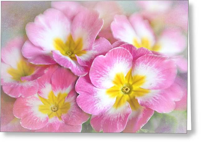 Primrose Bouquet Greeting Card by David and Carol Kelly