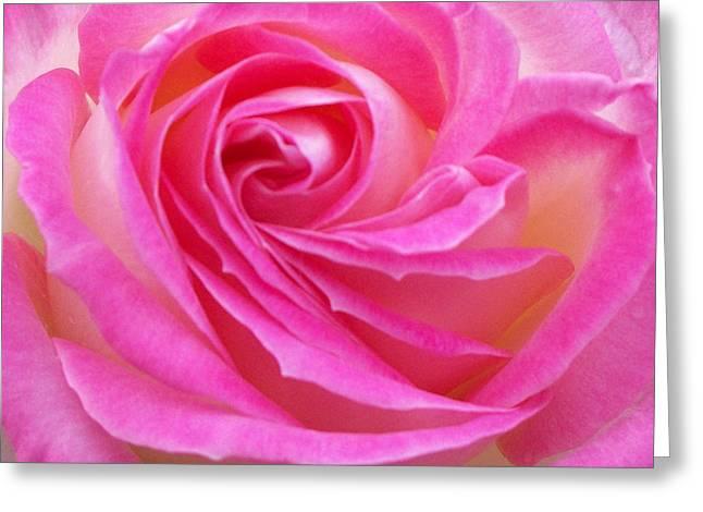 Princess Of Monaco Rose 2 Greeting Card