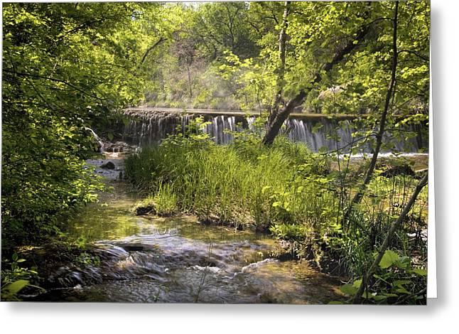 Pristine Forest Stream Greeting Card by Cindy Rubin