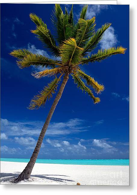 Pristine Tropical Beach  Greeting Card