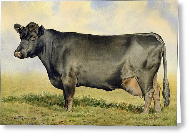 Prize Dexter Cow Greeting Card by Anthony Forster