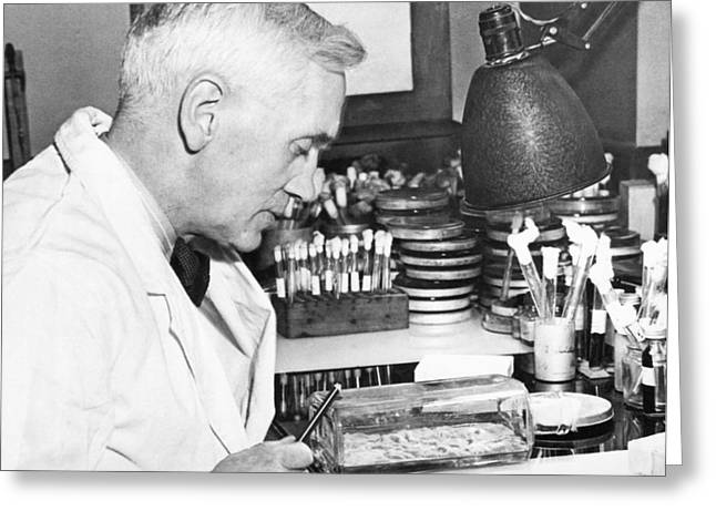 Professor Alexander Fleming Greeting Card by Underwood Archives