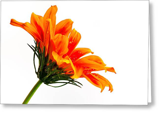 Greeting Card featuring the photograph Profile Of A Flower by Marwan Khoury
