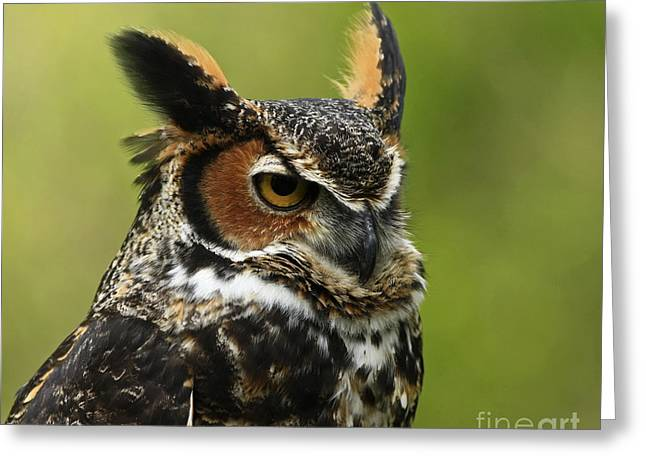 Profile Of A Great Horned Owl Greeting Card by Inspired Nature Photography Fine Art Photography