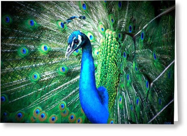Greeting Card featuring the photograph Profile Of A Peacock  by Heidi Manly