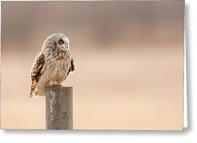 Profile Of A Short-eared Owl 1 Greeting Card