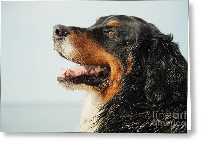 Profile Of Dog Greeting Card by Aleksey Tugolukov