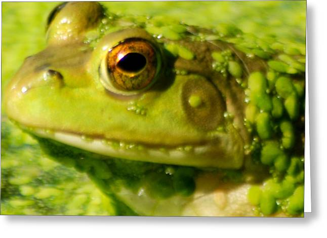 Profiling Frog Greeting Card by Optical Playground By MP Ray