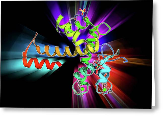 Programmed Cell Death Protein 6 Molecule Greeting Card by Laguna Design