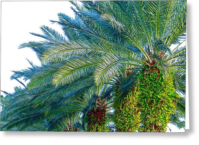 Progression Of Palms Greeting Card by Joy Hardee
