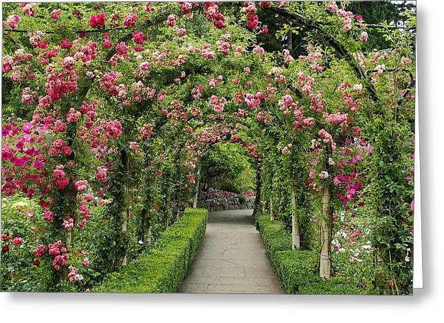 Greeting Card featuring the photograph Rose Promenade   by Natalie Ortiz