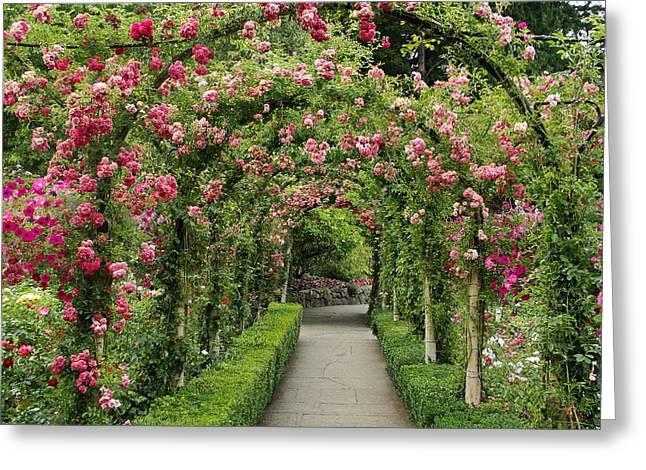 Rose Promenade   Greeting Card
