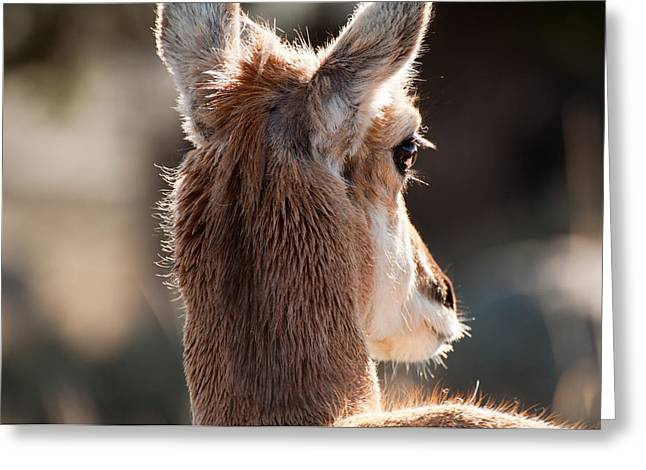 West Yellowstone Greeting Cards - Pronghorn Eye Greeting Card by Bruce Gourley