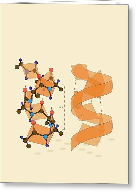 Protein Alpha Helix Structure Greeting Card by Ramon Andrade 3dciencia