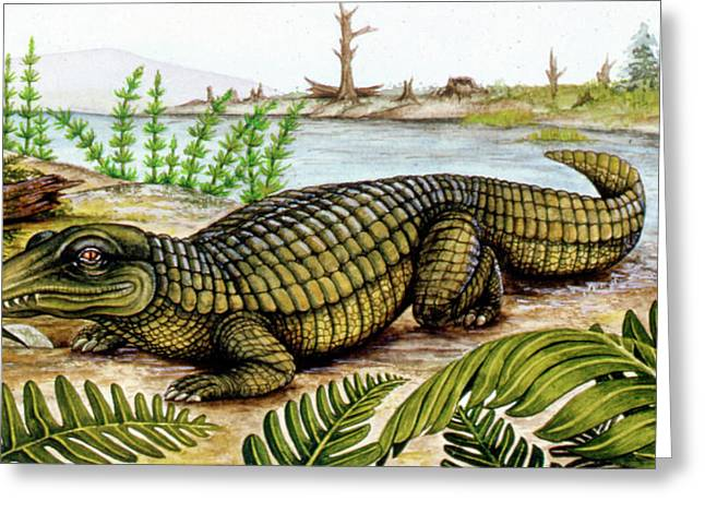 Proterosuchus Greeting Card by Deagostini/uig
