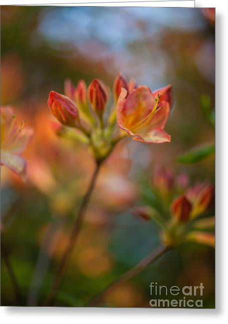 Proud Orange Blossoms Greeting Card by Mike Reid