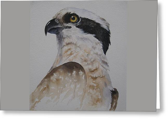 Proud Osprey Greeting Card