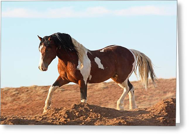Proud Paint Mustang Greeting Card