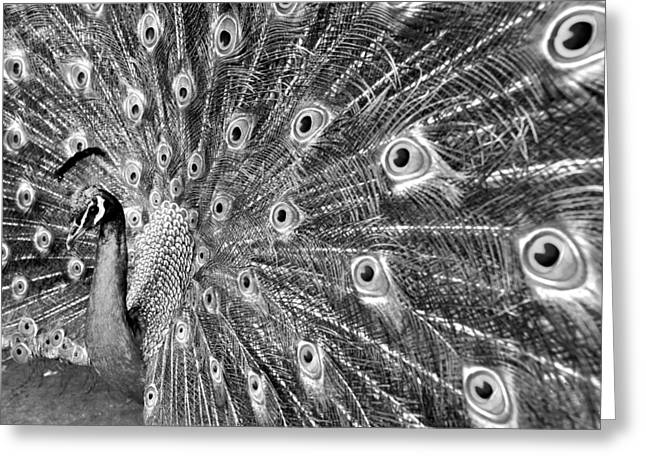 Proud Peacock Greeting Card by Sean Davey