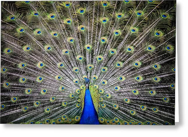 Proud Peacock Greeting Card