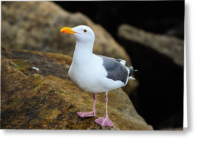 Proud Seagull Greeting Card