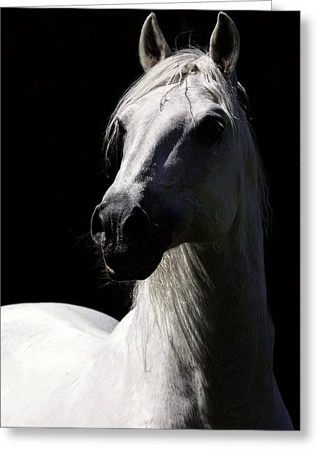 Proud Stallion Greeting Card