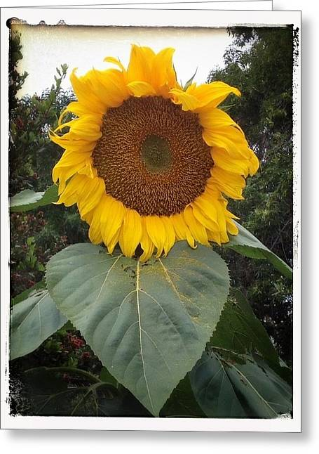 Proud Sunflower Greeting Card