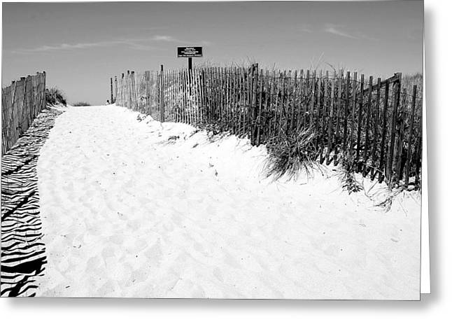 Provincetown Dunes On Cape Cod Greeting Card