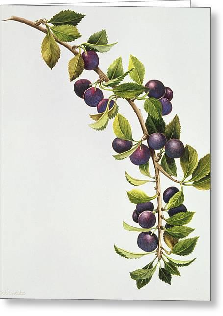 Prunus Insititia Greeting Card